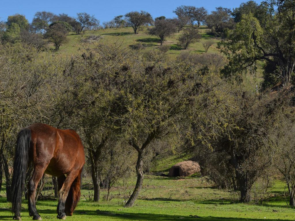 vistas del valle caballo 1
