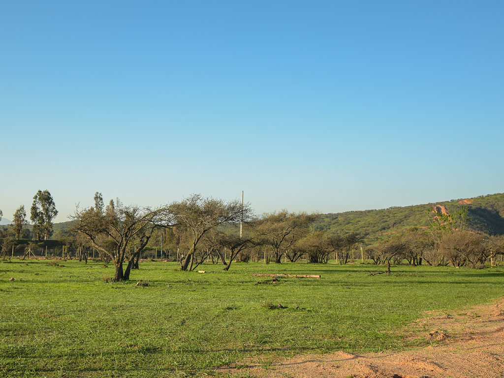 valle de limache 12